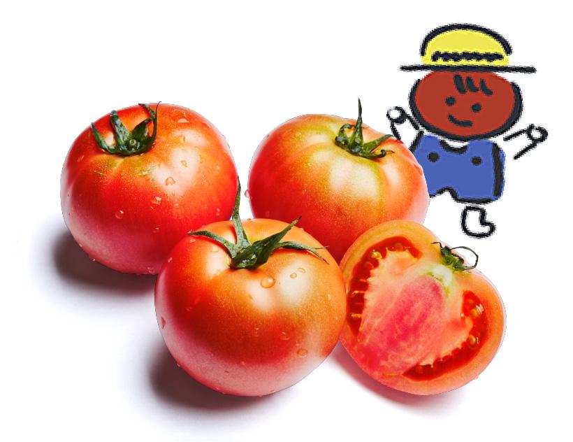 八百ちゃんトマト